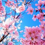 デニムジャケットのメンズコーデ!40代50代のおしゃれな春の着こなし術!