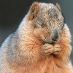 黙祷の意味とは?正しい仕方・黙祷を捧げる意味あるの?
