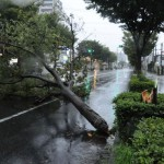台風が多い時期はいつ? 日本に多いわけは?