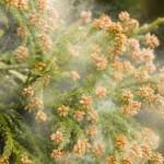 秋の花粉症の症状とは?春の花粉症との違いはあるの?